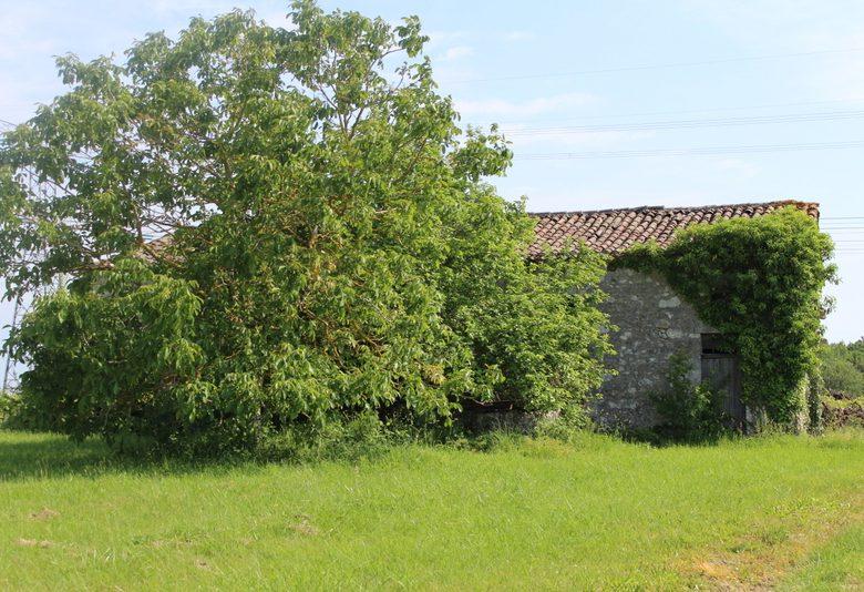 Lokale Kuckucksschleife in Landerrouat